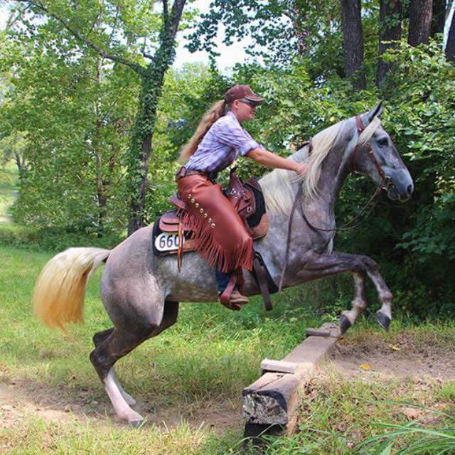Missouri Fox Trotter - Clay Pit Stables